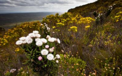 Western Cape